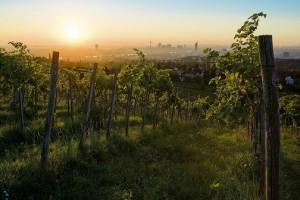 32007-Weingarten - Copia