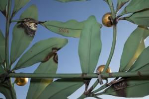 18.09.12 Vienna, Secession, dettaglio foglie dorate cupola