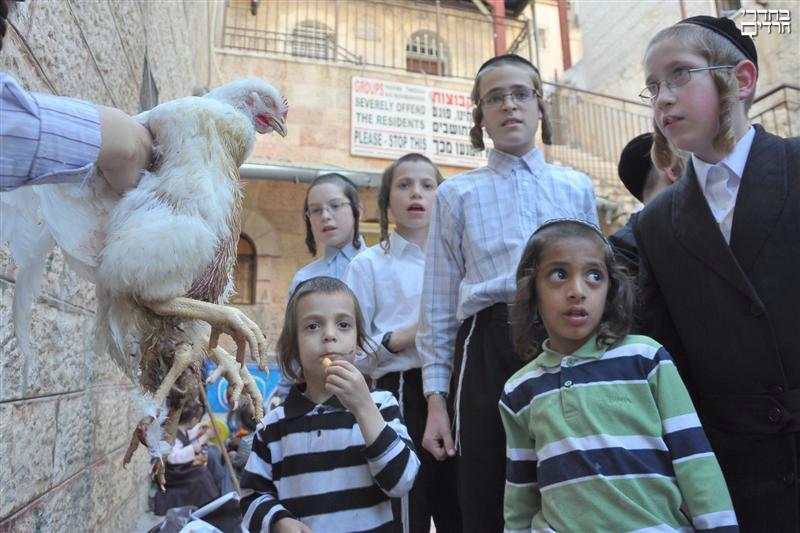 L'animale ha suscitato un dibattito fra i rabbini: è kosher oppure no?