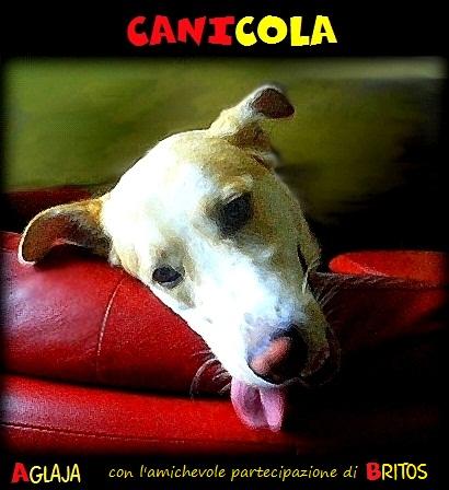 canicola2