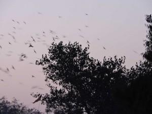 Albero con i pappagallini