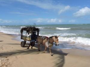 Asinello sulla spiaggia