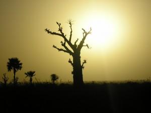 albero_dei_morti