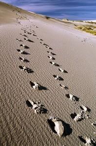 orme sabbia