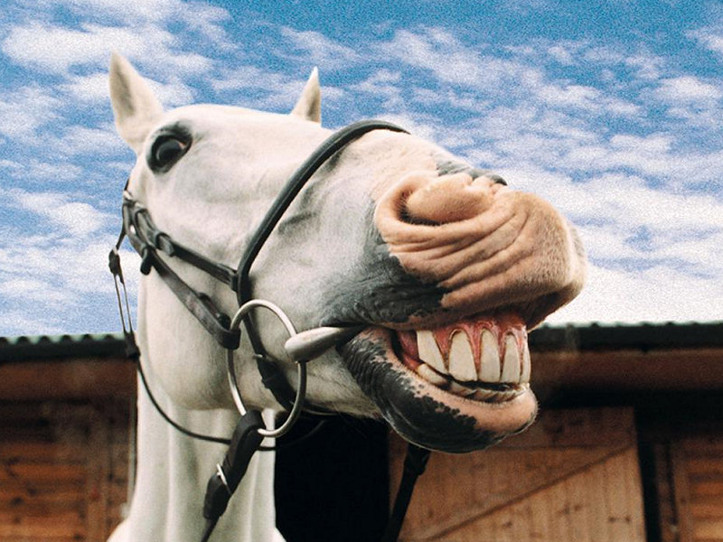 cavallo-3