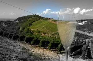 vino oltrepo