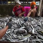 Immigrati birmani sulle barche da pesca thai