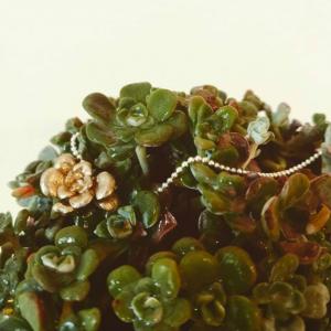 Laboratorio Nido - Dettaglio Succulenta