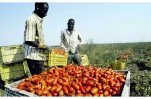 Agricoltura  50mila invisibili nei campi. La vergogna del caporalato sulla Bbc   Repubblica.it