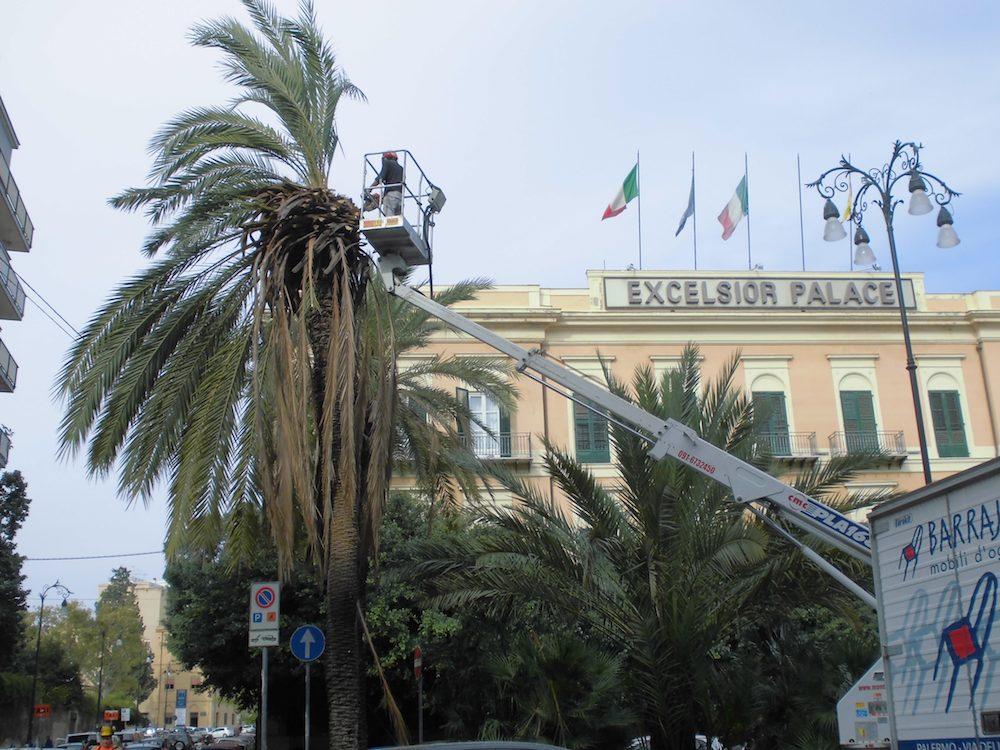 palma ko piazza mordini