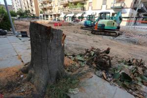 Palermo 2562015 ( FOTO PETYX PALERMO) ficus tagliato in via sicilia