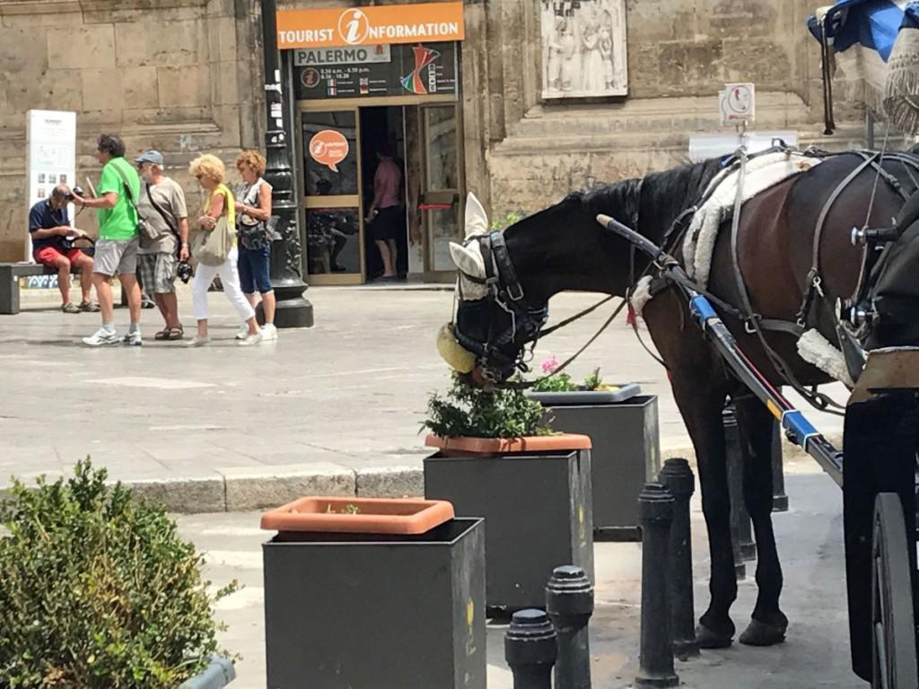 cavallo2
