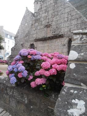 Ortensie in Bretagna - Foto di Patrizia Pozzi
