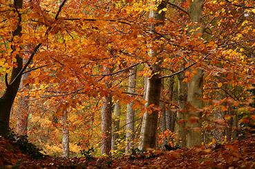 """Parco della Burcina - dal sito """"www.farm5.staticflickr.com"""""""