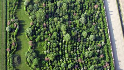 Dominio di Bagnoli veduta aerea - Foto di Dario Fusaro