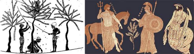 """L'ulivo e la raccolta delle olive nella pittura vascolare greca - 500 a.C. circa - dal sito """"www.pappalardolio.it"""""""