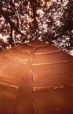 Festival dell'Arte Topiaria di Lucca - Foto di proprietà dello Studio Pozzi