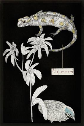 Scatola-Entomologica-Salamandra