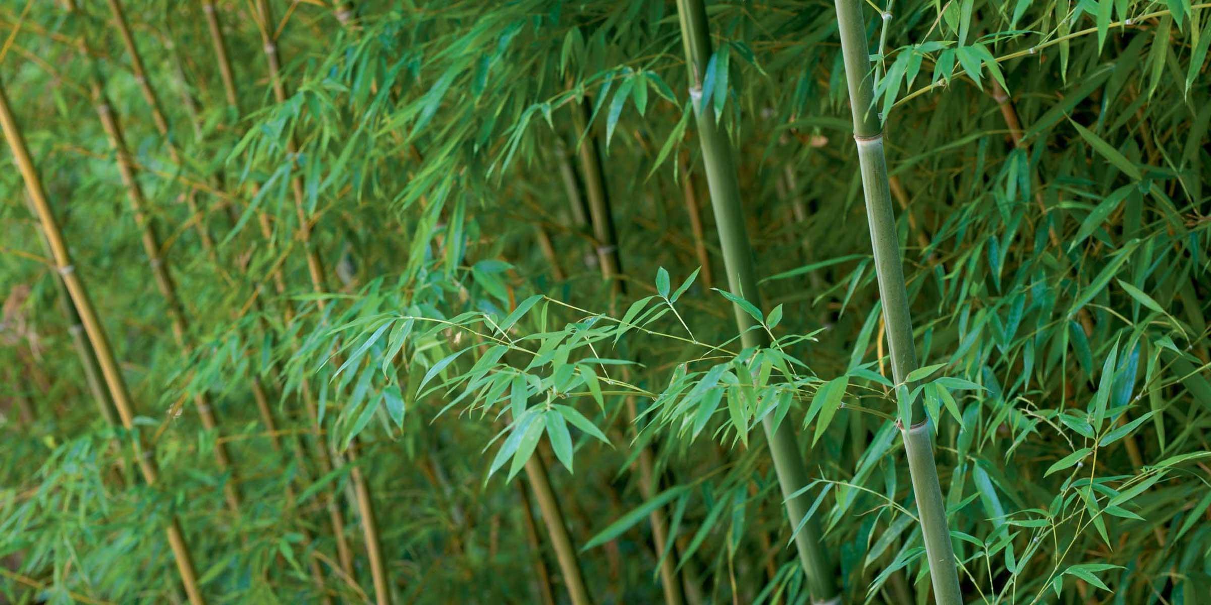 bambu4_img_5926_full