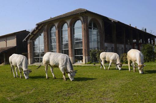 L'esterno della spa Nature con mucche al pascolo
