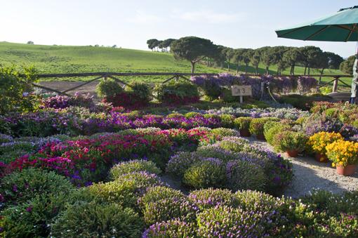 6) FloraCult Roma, l'orizzone a perdita d'occhio