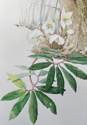 Acquerelli Botanici