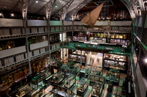 Oxford_-_Pitt_Rivers_Museum