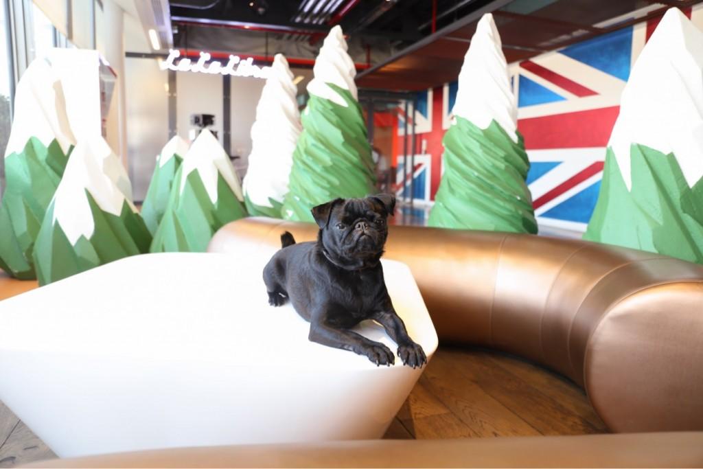 Horatio, quadrupede negli uffici di Google a Londra