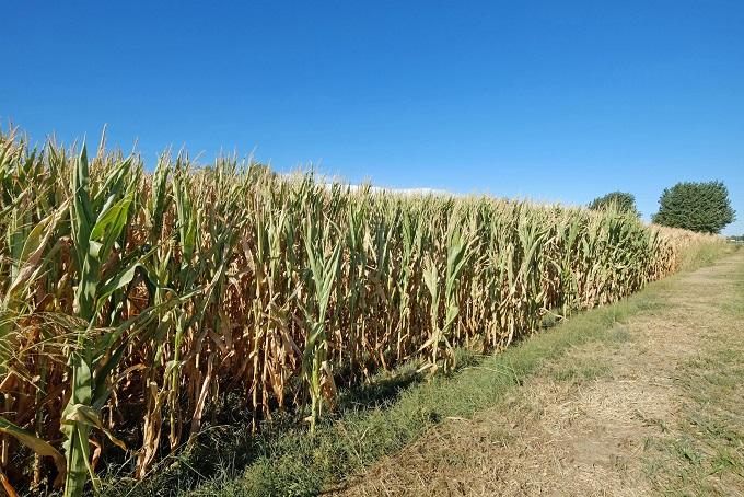Siccità: Ministero agricoltura, a breve riunione con Regioni