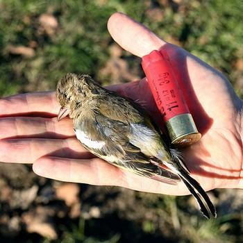 Si ricomincia a sparare zoelagatta blog - Uccelli che sbattono contro le finestre ...
