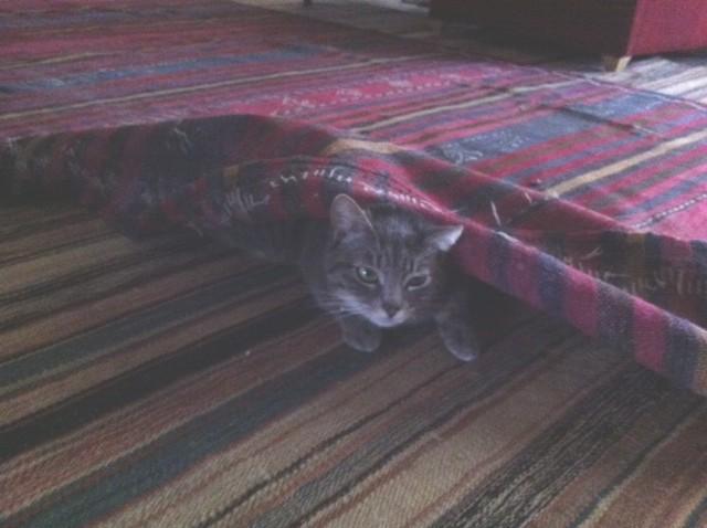 Kiki a caccia sotto il tappeto