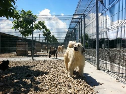 Calvino, uno dei cani ospiti di Save the Dogs in Romania