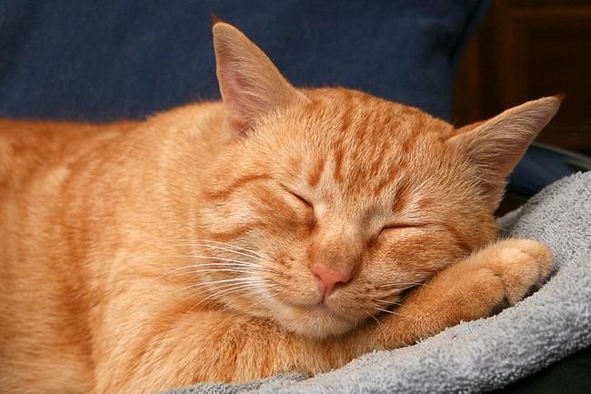 Gatto_dorme