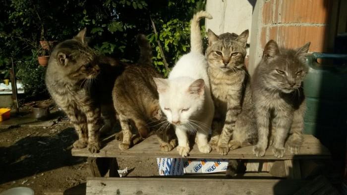 I vecchi gatti