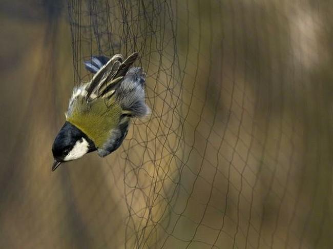 Uccellagione
