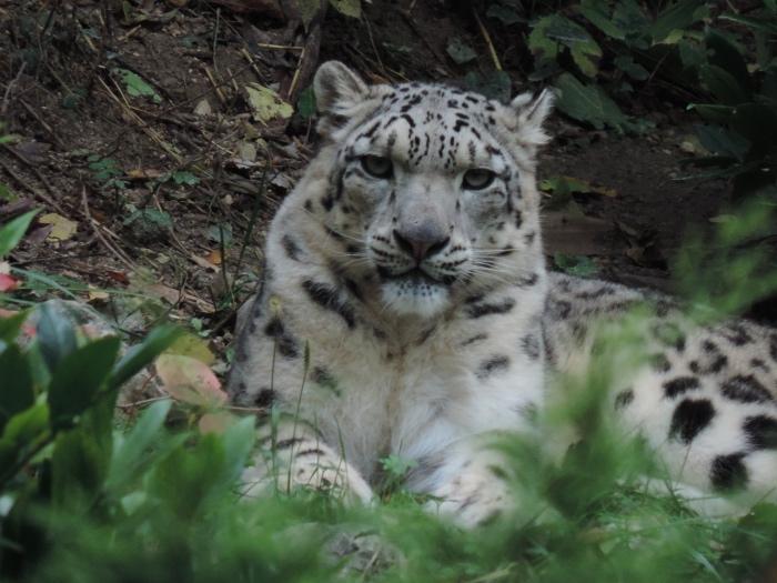 2014 RANZONI leopardo nevi