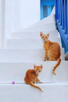 gatto grecia