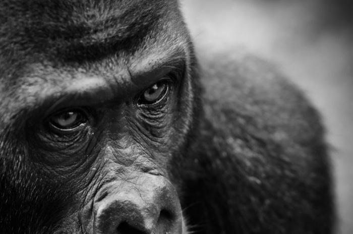Gorilla TS1_Fotor