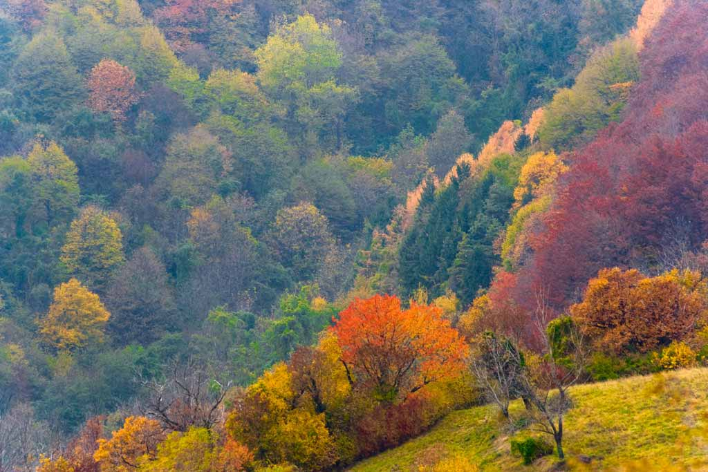 Il Cansiglio d'autunno (foto Proloco di Fregona)
