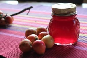 IMG_6227-gelatina-di-mele-di-Anna-Ferro
