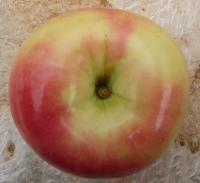 mela-gelata-1