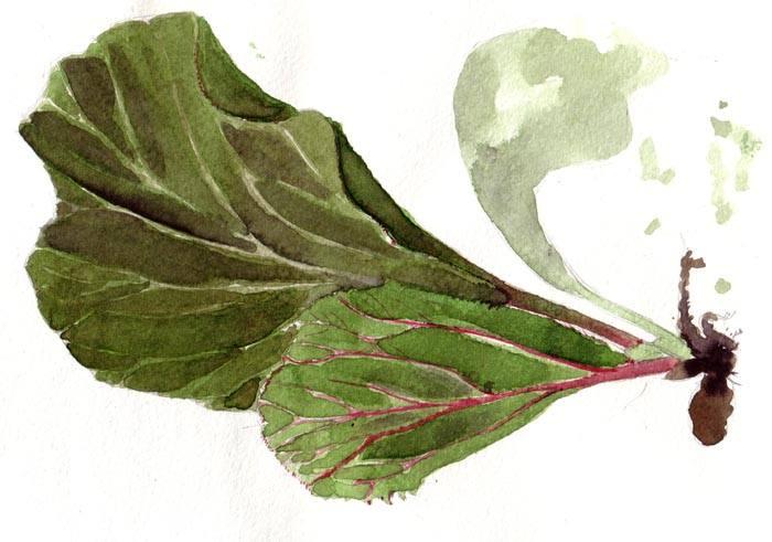 bergenia-cordifolia-filippo-marroccoli