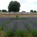 labirinto-mon-amour-P1190972