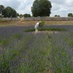labirinto-mon-amour-P1200036