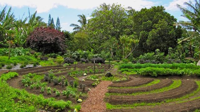 Un esempio di coltivazione in permacultura