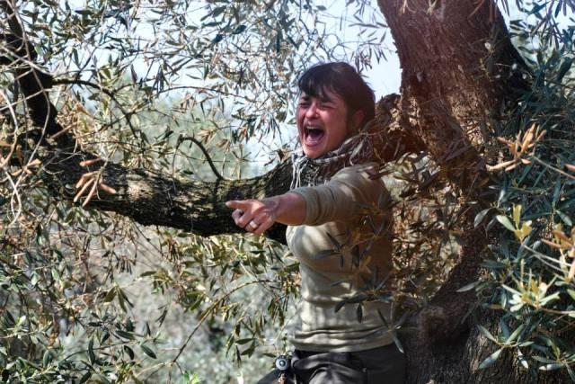 Xylella, la Puglia piange (ph Valerio Saracino)