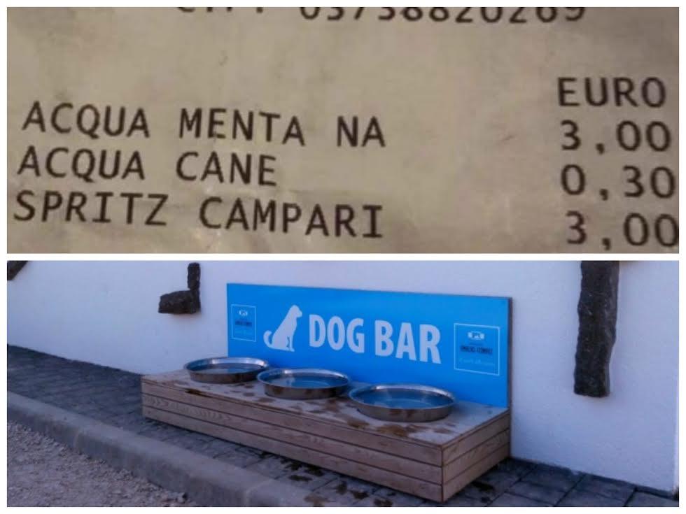 dogbar