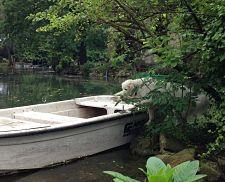 Picchia non si separa mai dalla sua padrona, ma al parco prende alcune iniziative. Come salire su una barca a riva del laghetto