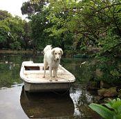 Senza dubbio la barca si muove: che fare?