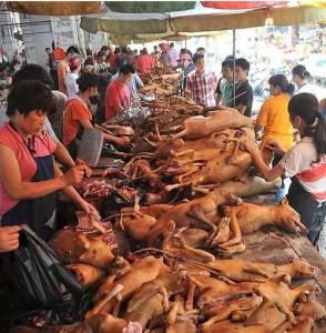 Cani in vendita su un banco alimentare thailandese